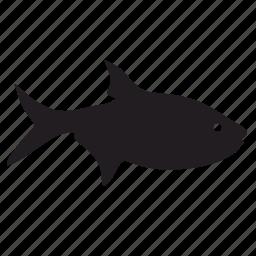 fish, wild icon