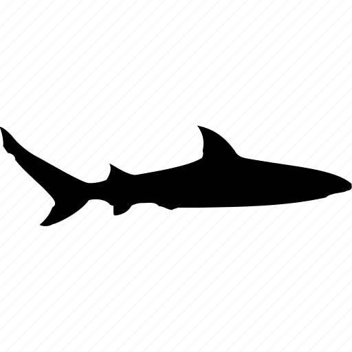fish, ocean, sea, shark, shark attack, shark fin, shark warning icon
