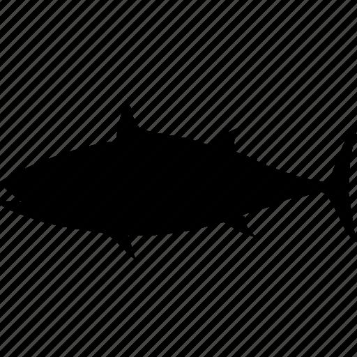 fish, sea, shark, shark attack, shark fin, shark warning, water icon