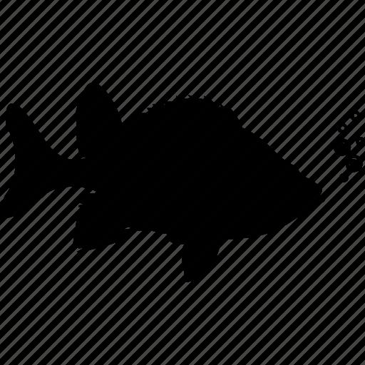 animal, fish, fishing, fishy, ocean, sea, seafood icon