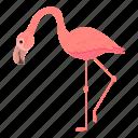 exotic, flamingo, pink, bird