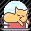 cat, cat animal, creature, kitten, sleeping cat, specie icon
