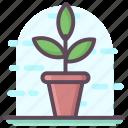 decorative flower, flower pot, interior decoration, plant pot icon
