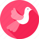 bird, dove, pigeon icon