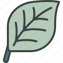 eco, ecology, go green, green, leaf, leaves, nature, tree icon