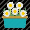 daisy, flowers, plant, pots icon