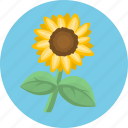 flower, nature, plant, sun flower icon