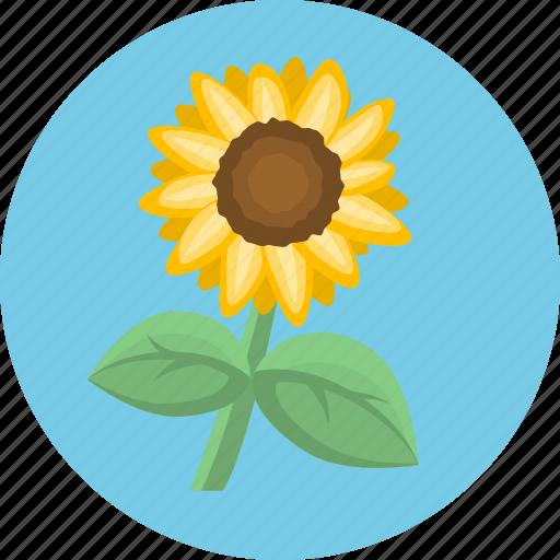 flower, nature, plant, sun flower icon