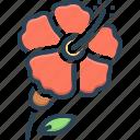 carmine, flower, hawaii, hibiscus, malvaceae, petal, pistil