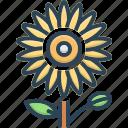 botanical, bud, dandelion, flower, flowers, ice plant flowers, natural
