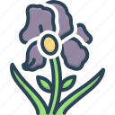 blossom, botanical, florist, flower, flowers, iris flowers, natural