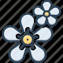 aroma, bunch, flower, gardenia, jasmin, murraya, natural
