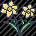 chamomile, daffodil, daffs, easter, flower, narcissus, spring