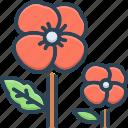 florist, flower, fragrance, ladylike, pansy, petals, spring