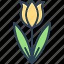 bud, colorful, decoration, natural, seasonal flower, spring blooming, tulip