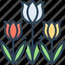 blossom, botanical, bunch, decoration, seasonal flower, spring blooming, tulip