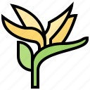 bird, blossom, botanic, exotic, paradise