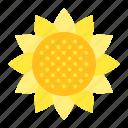 bloom, blossom, floral, flower, petal, sunflower icon