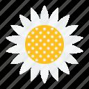 bloom, floral, flower, petal, spring, sunflower icon