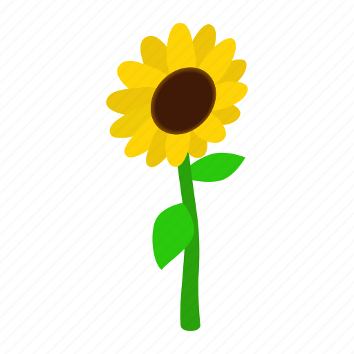 floral, flower, isometric, nature, plant, spring, sunflower icon