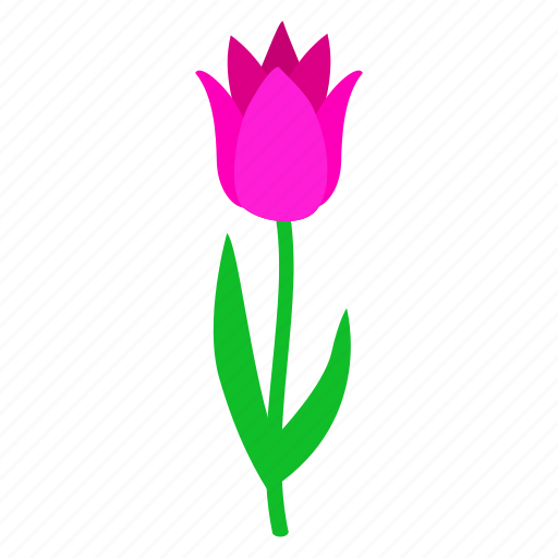 floral, flower, isometric, nature, plant, spring, tulip icon
