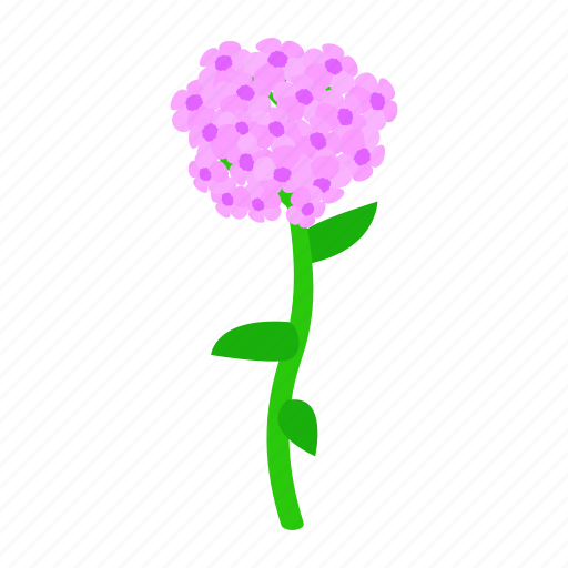 floral, flower, hydrangea, isometric, nature, plant, spring icon