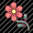 bloom, flower, plant, spring