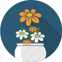 floral, flower, flowerpot, garden, nature, plant, rose