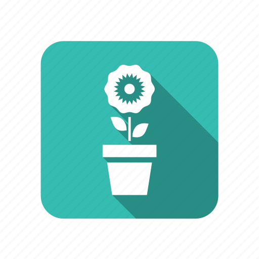 ecology, environment, flower, flowers, leaf, nature, plant, potted icon