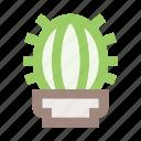 cactus, flower, flower pot, interior, plant, plant pot, pot
