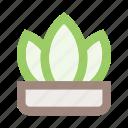 flower, flower pot, herb, interior, leaf, plant, pot