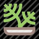flower, flower pot, herb, interior, plant, plant pot, pot