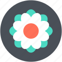 beauty, blossom, flower, freshness, swirl shape flower icon