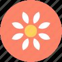 bloodroot flower, blossom, flower, nature, spring flower