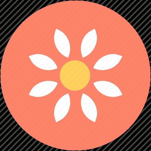 bloodroot flower, blossom, flower, nature, spring flower icon