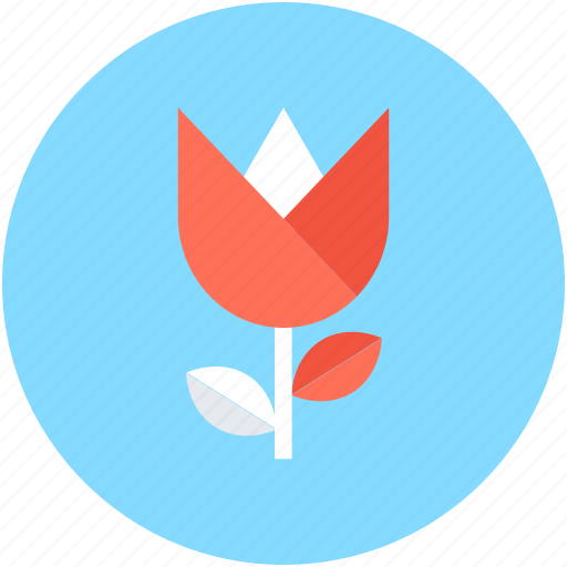 beauty, flower, spring flower, tulip, tulip bud icon