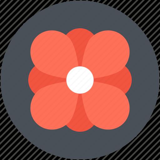 decoration, flower, petals, shamrock flower, trifoliolate icon