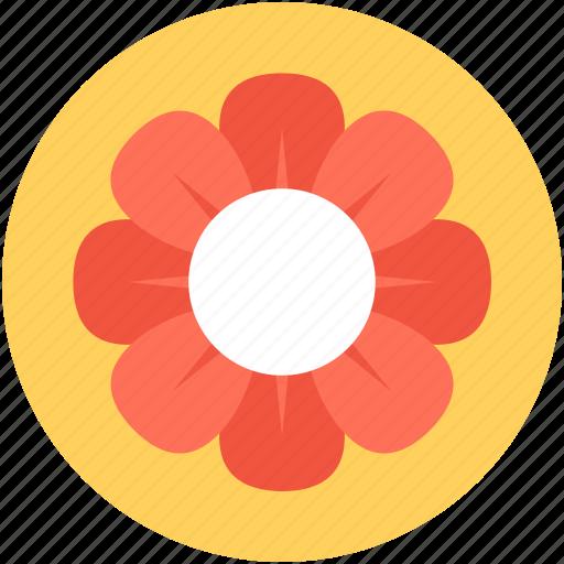 Amaryllis, amaryllis flower, clematis, flower, holiday icon - Download on Iconfinder