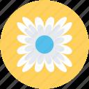 bachelors button, cornflower, wildflower, flower, nature icon