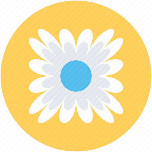 bachelors button, cornflower, flower, nature, wildflower icon
