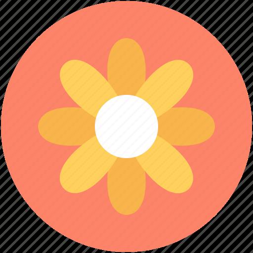 amaryllis, amaryllis flower, clematis, flower, holiday icon