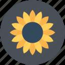 beauty, flower, nature, periwinkle, periwinkle flower