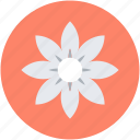 beauty, flower, kousa dogwood, kousa flower, nature icon