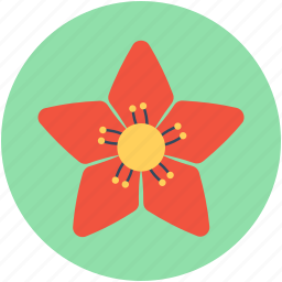 bloom, blossom, christmas flower, decoration, poinsettia flower icon