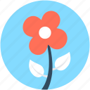 blossoming, floral, flower, petals, sagittaria graminea icon