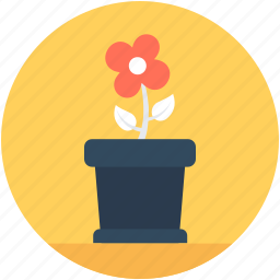 flower pot, flowering plant, plant, red rose, rose icon