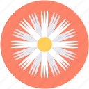 aster, aster flower, bloom, calendula, flower icon