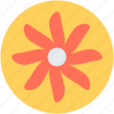 bloodroot, bloodroot flower, decoration, flower, spring flower icon