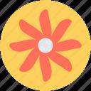bloodroot, bloodroot flower, decoration, flower, spring flower