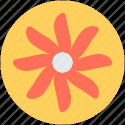 bloodroot, bloodroot flower, decoration, flower, spring flower icon